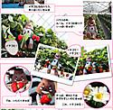 Ichigo_cupo_2